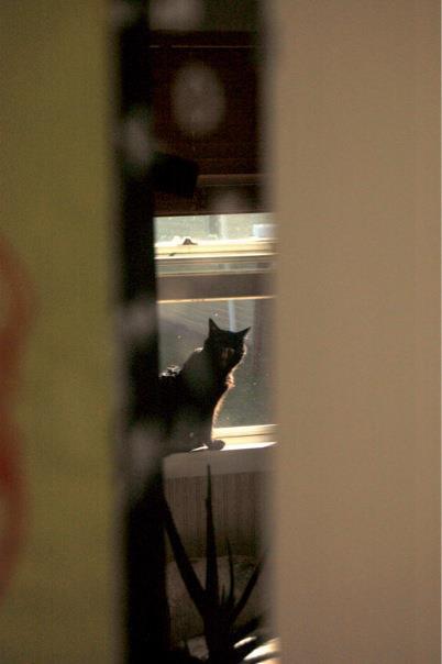 reflection of black cat yawning
